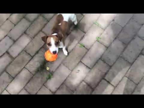 Дрессировка собак в Харькове и пригороде - Сайт kinolog