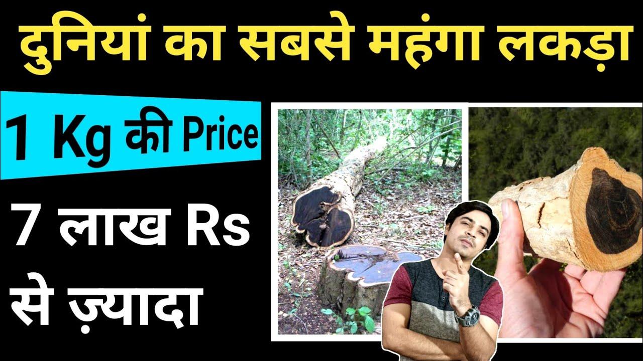 यह हैं दुनियां की सबसे महंगी लकड़ी, 7 Lakh Rs/Kg #shorts / Jasmin Patel / Jasstag