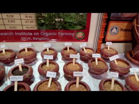 Organic Millets in Bangalore  2017