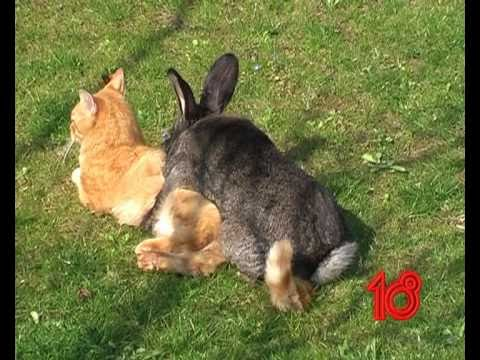 Rabbit vs Cat