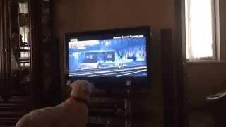 """Как собака смотрит """"Хатико"""""""