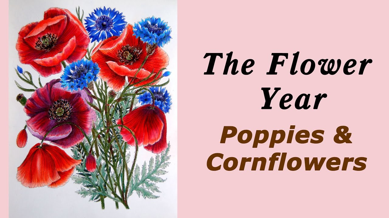 Colouring \'Flower year\' Poppies and Cornflowers / Раскраска ...