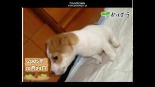 かんさい情報ネット ten.の芽生えのコーナーのアプリで撮った 愛犬ジャ...