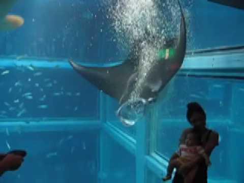 Osaka Aquarium (海遊館 Kaiyūkan)