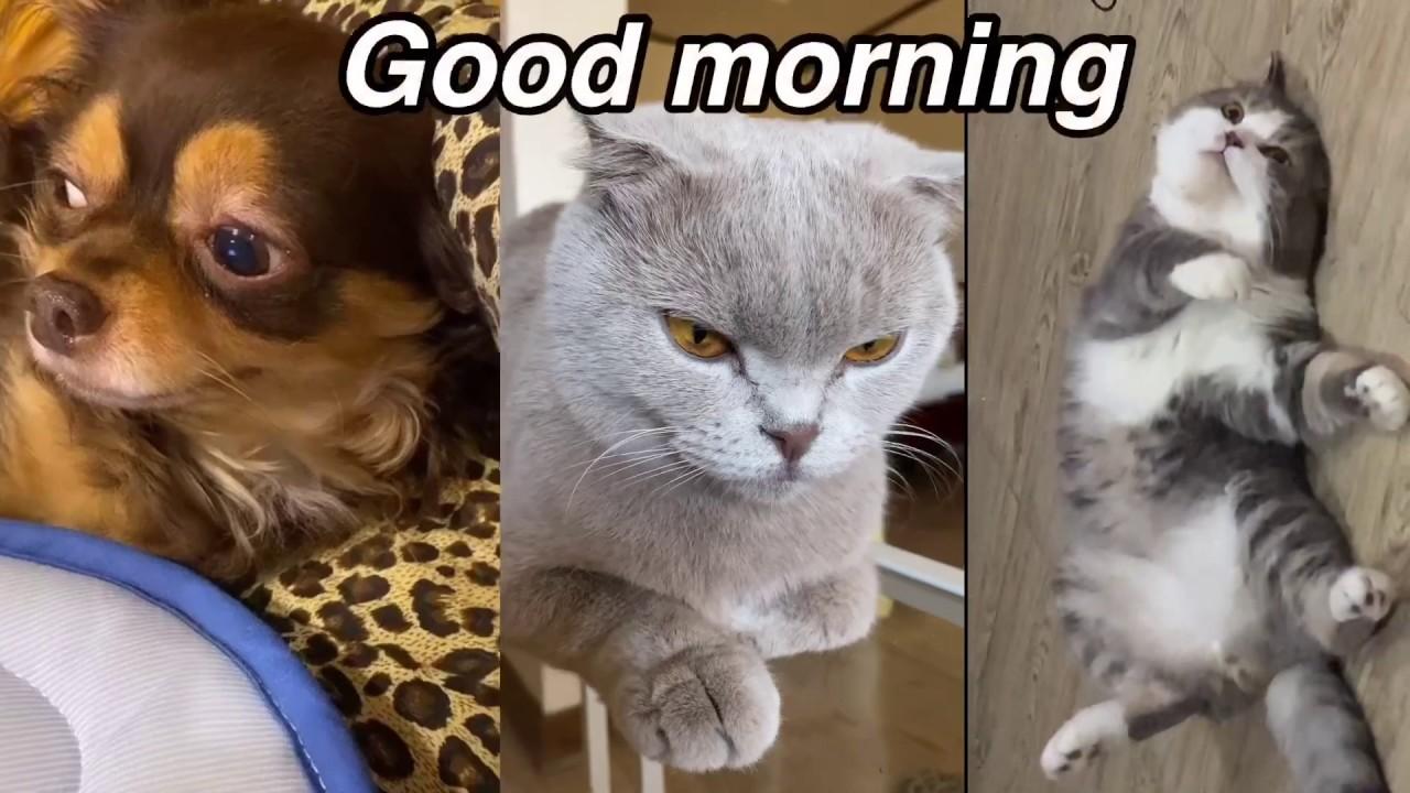 สามเกลอ ละเมอตื่น