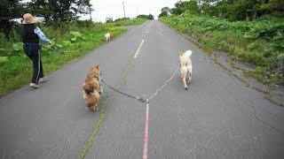 8月8日 夕方散歩 みんな一緒に 最後はバラバラでしたけど(^▽^;) 春吉は...