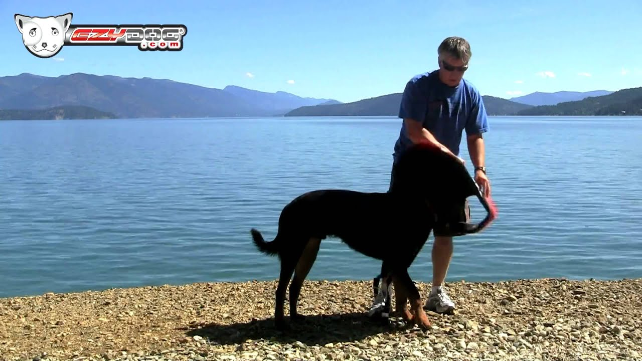Ezydog Dfd Dog Flotation Device Youtube