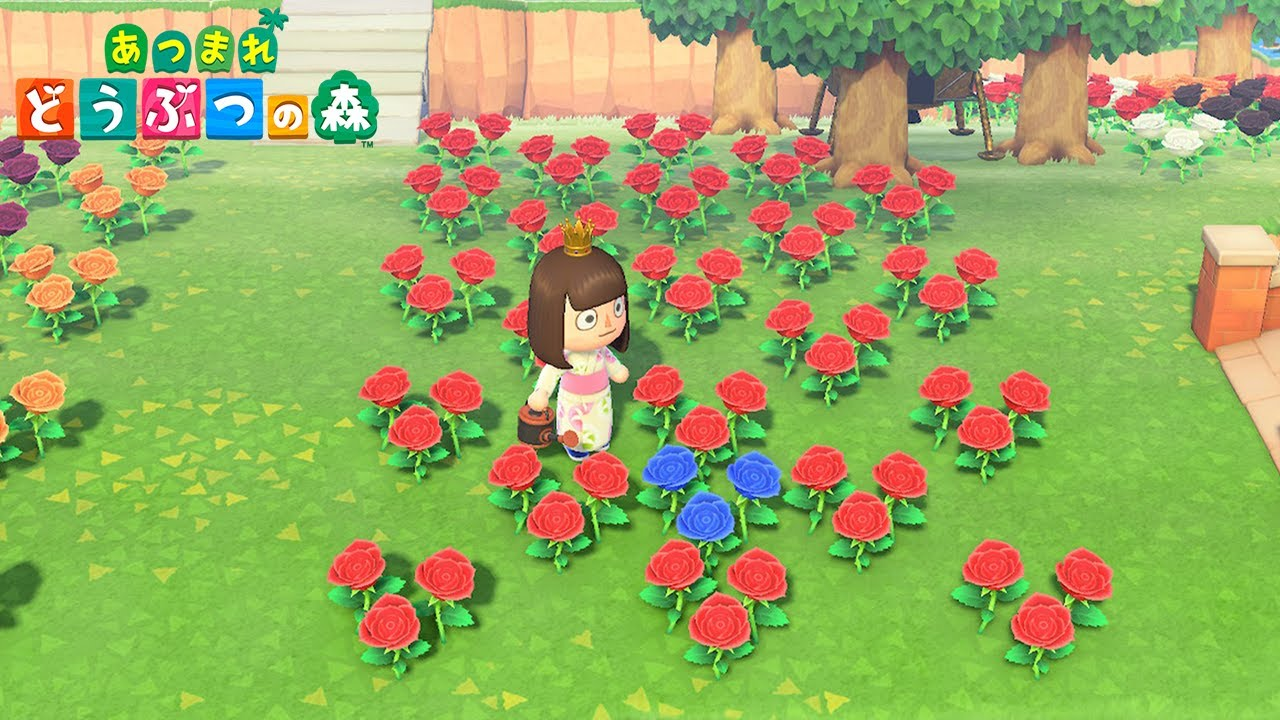 Animal Crossing Flower Breeding Guide How To Get Hybrid