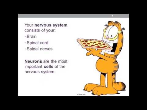 Healthy Habits Brain Science and Alzheimer's Disease Presentation