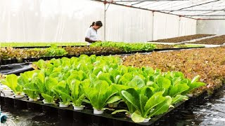 Floating hydroponic vegetables cultivation - Growing vegetables on the water - Modern Agriculture