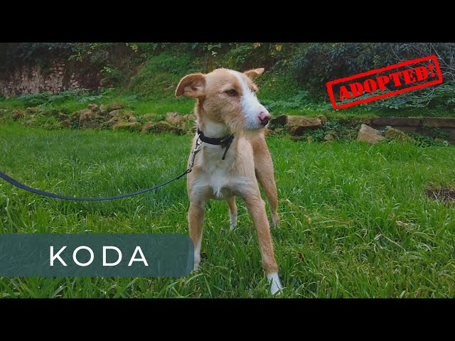 Eu sou o KODA
