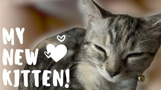 Adopting a Kitten for the First Time! *Adoption Process & Basic Kitty Supplies*