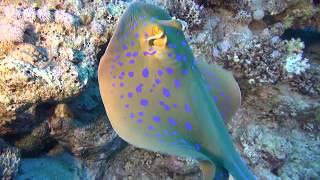 Дайвинг-сафари Diving Safari Egypt RedSea