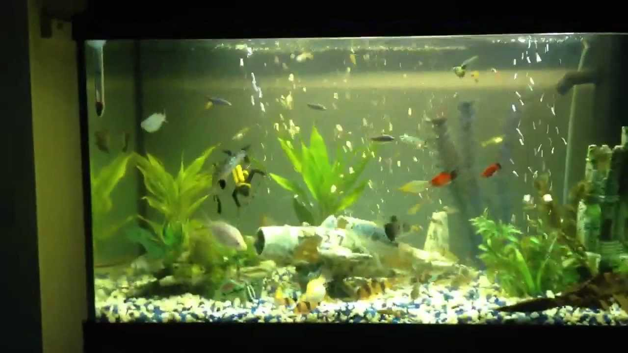 fish tank 120 l aquarium youtube. Black Bedroom Furniture Sets. Home Design Ideas