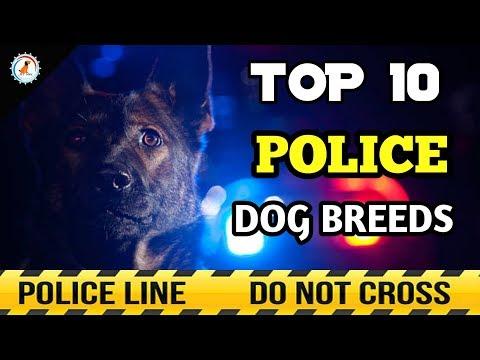 TOP 10 POLICE DOG BREEDS / best police dogs breeds