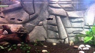 как сделать задний фон для аквариума своими руками