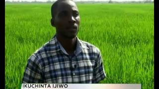 RICE FARMERS SEEK GOVT'S INTERVENTION | TVC NIGERIA
