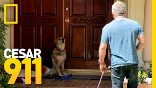 All Bark and Hopefully No Bite | Cesar 911