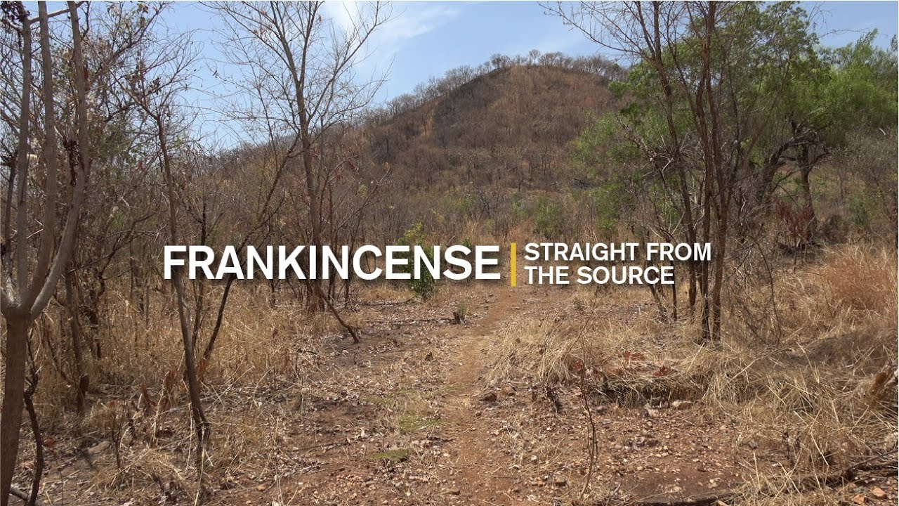 Straight From the Source: Frankincense, Ethiopia