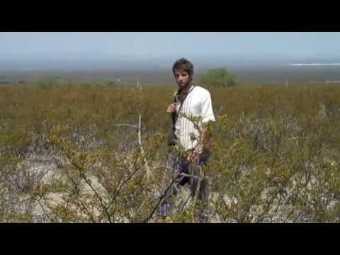 MEXICO DESERT PEYOTE HUNTING