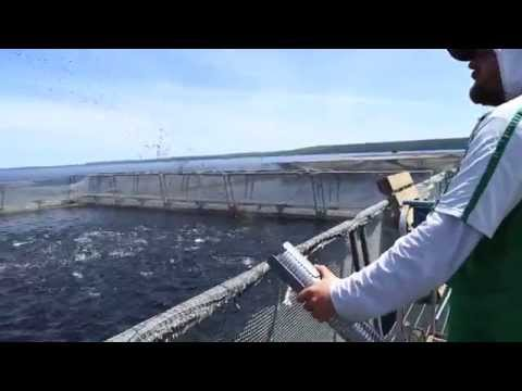 Ontario Aquaculture - Pioneering in Organics