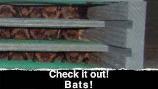 Bat Houses That Attract Bats