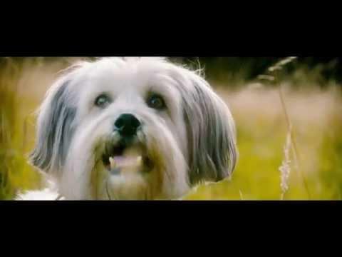 Pudsey The Dog: The Movie Teaser Trailer [Vertigo Films] [HD]