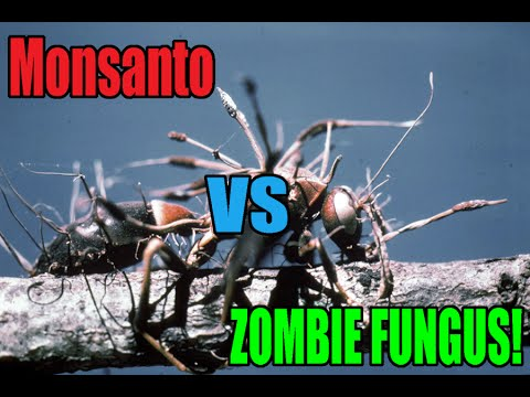 Quickie: Destroying Monsanto With A... GMO Zombie Fungus?