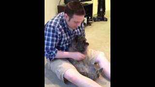 Chris & Lucy The Cairn Terrier