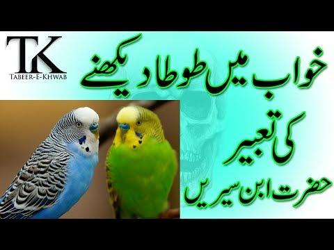 khwab mein parinda birds dekhna