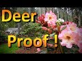 The Best Deer Resistant Plants to Include in Your Landscape