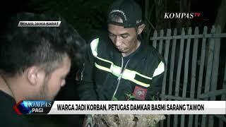 Warga Jadi Korban, Petugas Damkar Basmi Sarang Tawon Vespa