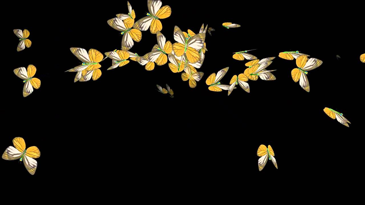 Фото бабочки на черном фоне