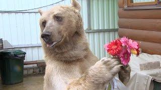 Один день с... Один день с медведем Степаном