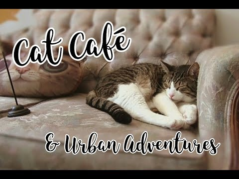 Visiting a Cat Cafe! - Exploring Downtown Montreal