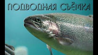 Подводная жизнь форели и рака Аркадия