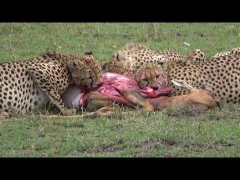 Best of Kenya Wildlife Photo Safari - Day 8 - September 4, 2017 - Masai Mara to the Mara Triangle