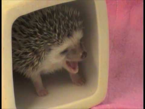 World's Greatest Mom In The World - Hedgehog Edition - Parry Gripp