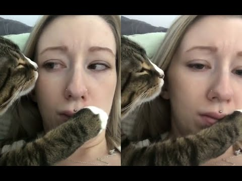 Overly Romantic Cat Annoys Owner