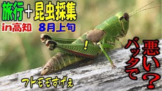 カブトムシ+クワガタ=昆虫採集 旅行しながら採集がんばってみっか!前...