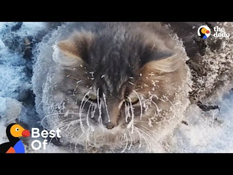 Frozen Animal Rescues | The Dodo Best Of