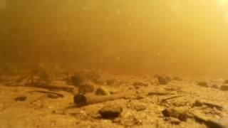 YUM Walleye Grub video
