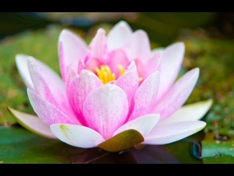 Zen Music, Relaxing Music, Calming Music, Stress Relief Music, Peaceful Music, Relax, ☯2769
