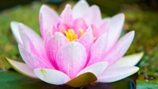 zen music relaxing music calming music stress relief music peaceful music relax ☯2769