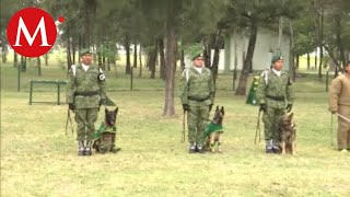 Perros policía de la Guardia Nacional, contra el crimen organizado