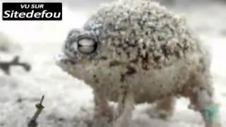 Download lagu ► Video Animal ◄ Compilation De cris Bizarres De Crapauds Et De Grenouilles