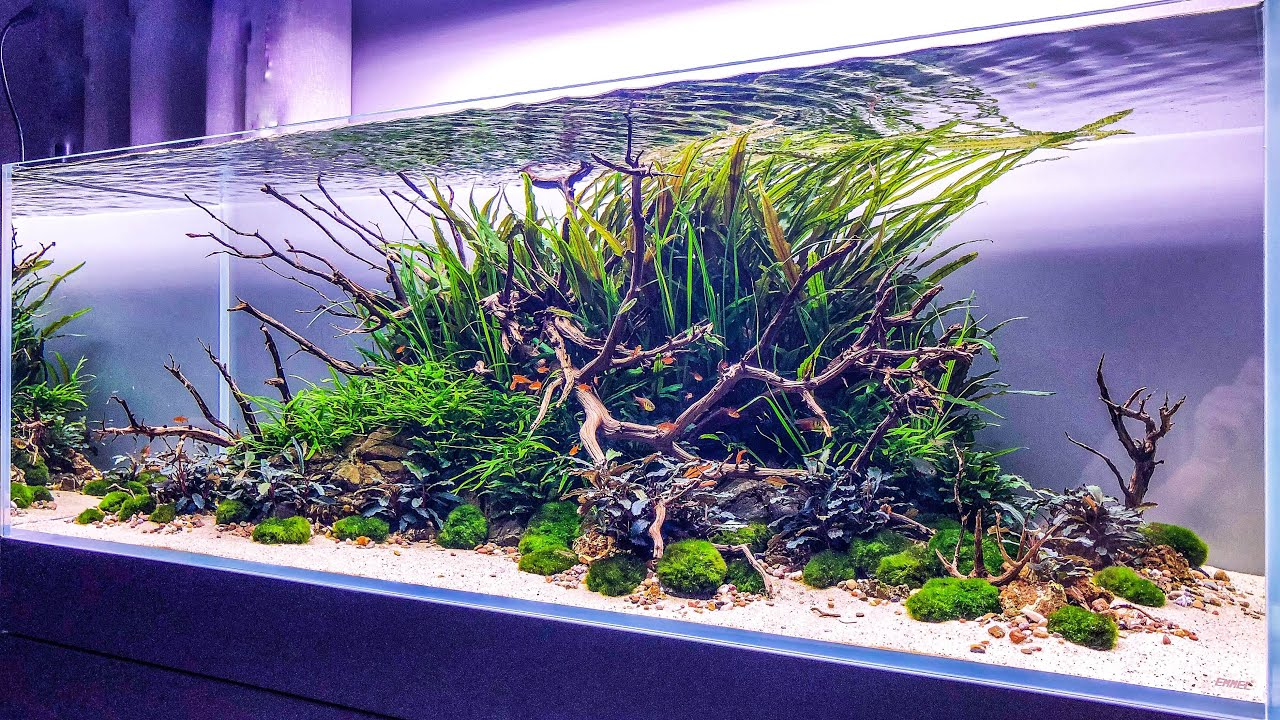Watch This Aquascape Get DESTROYED!
