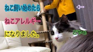 いやー、これは困りました( ˊᵕˋ ;)まさか猫アレルギーになってしまうと...