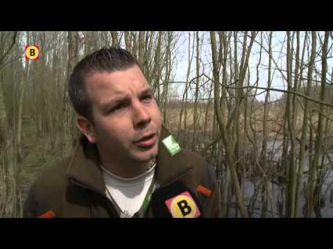 Gluren in de slaapkamer van de Biesboschbever - YouTube