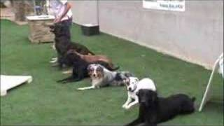 Dog Trainer School-become A Dog Trainer